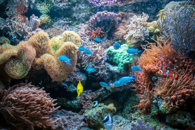 This is a colorful image of a variety of fish, including tang fish, clown fish, flame angelfish and blue Malawi cichlids, amid coral and rocks in a fish tank. Contact us for fish tank maintenance in Arizona.