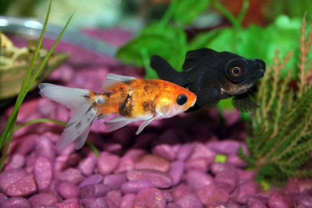 If you are looking for aquarium maintenance in Phoenix, you gain many benefits with Seatech as your partner.